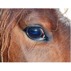 Horse Riders – Think Safety… Think ICE